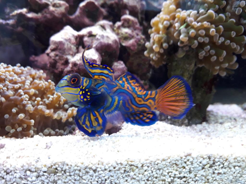photos de poissons et coraux  - Page 4 20200210
