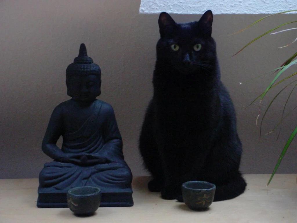 Мистические свойства кошки Otpkj310