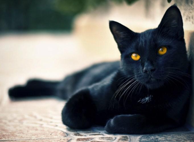 "Масло ""Черная кошка"" Screen51"