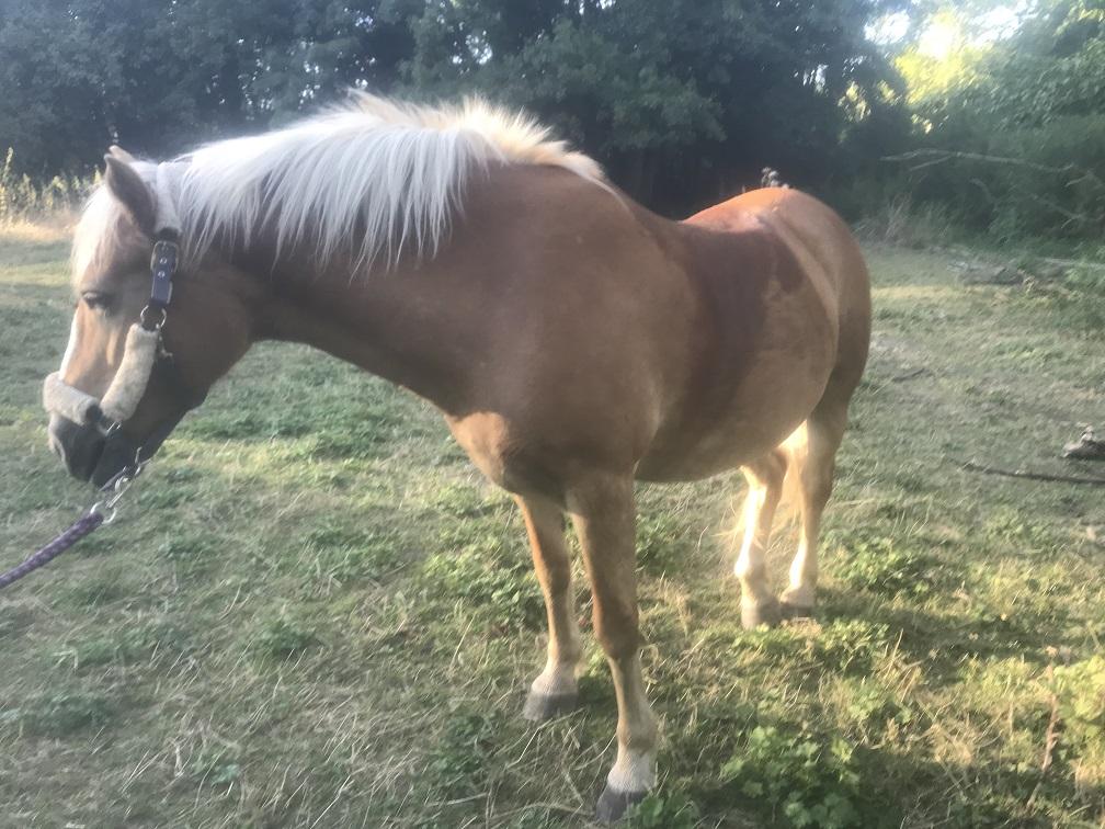 ISA ESPERANCE - poney Haflinger née en 1996 - adoptée en juillet 2017 par sonia et Olivier Isa_es18