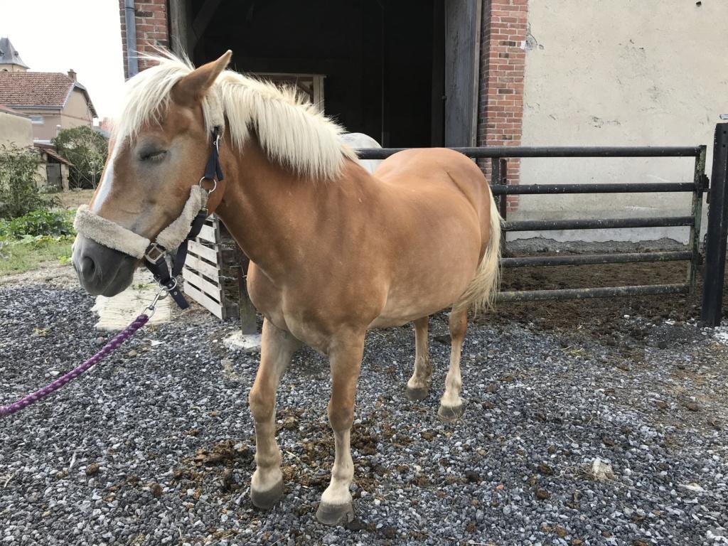 ISA ESPERANCE - poney Haflinger née en 1996 - adoptée en juillet 2017 par sonia et Olivier Isa_es46