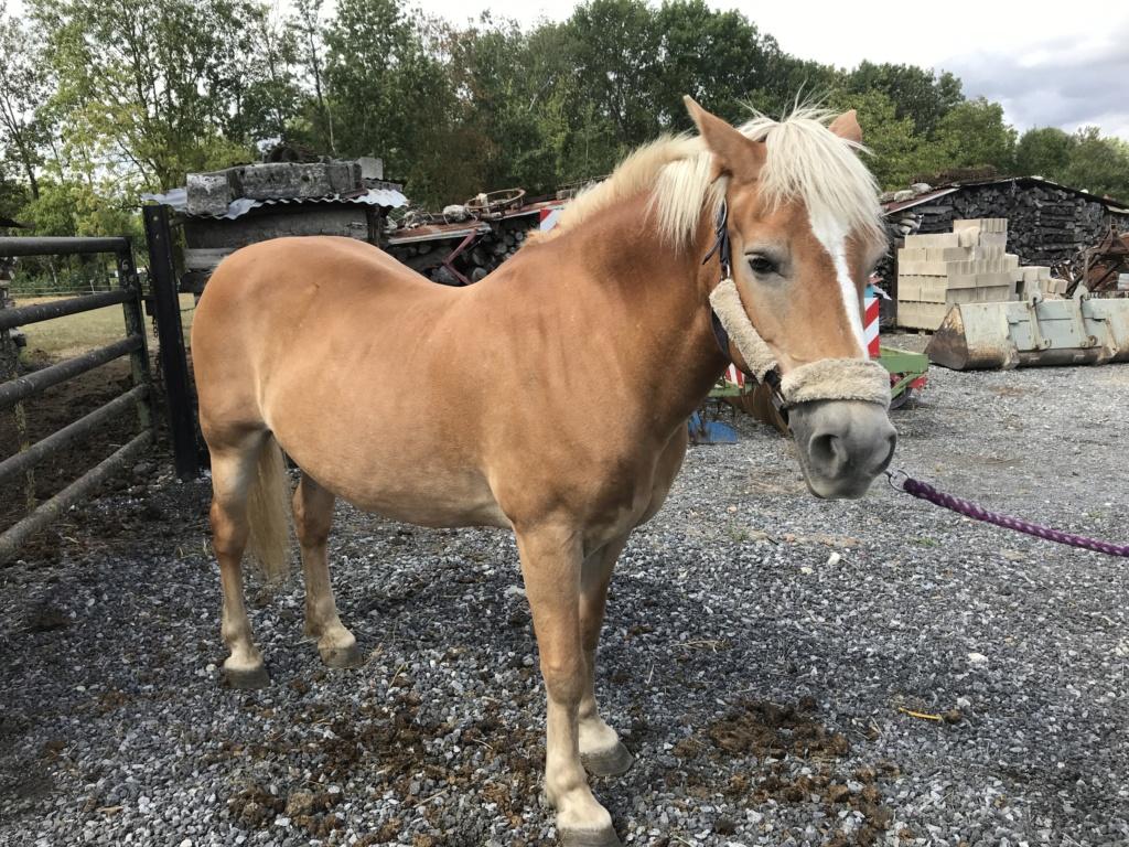 ISA ESPERANCE - poney Haflinger née en 1996 - adoptée en juillet 2017 par sonia et Olivier Isa_es47