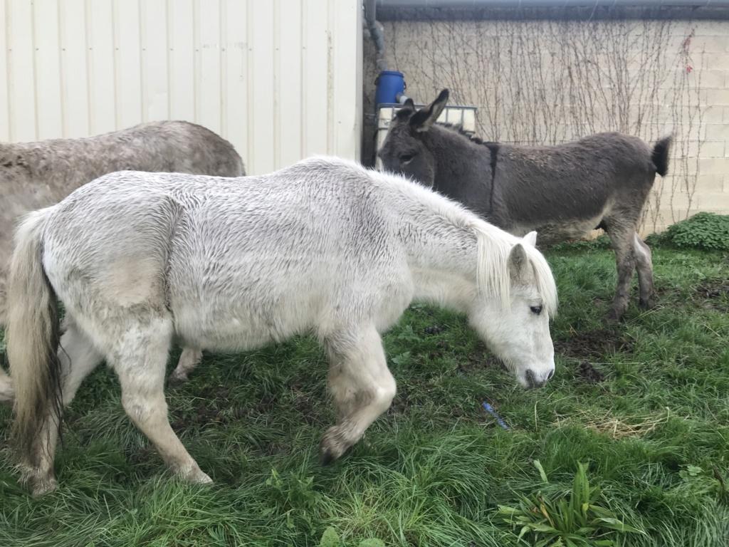 ULYSSE - OI Poney typé Shetland né en 1984 - adopté en juillet 2009  Ulysse25