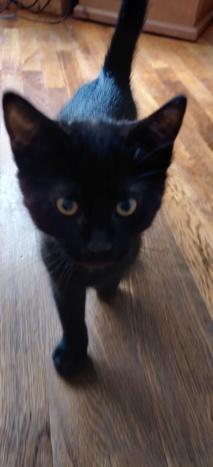 Des écrivain·e·s et des chats (avec des photos) Img_2081