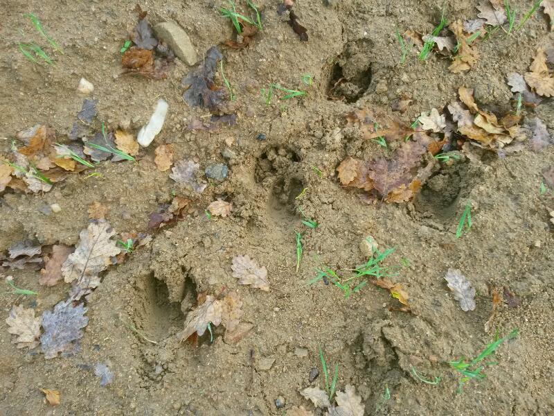 pieds,traces et indices - Page 30 Rps20114