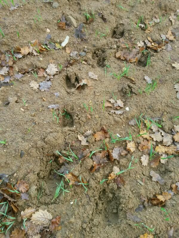 pieds,traces et indices - Page 31 Rps20119