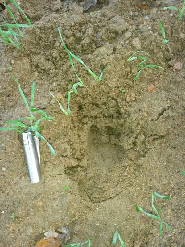 pieds,traces et indices - Page 31 Rps20127