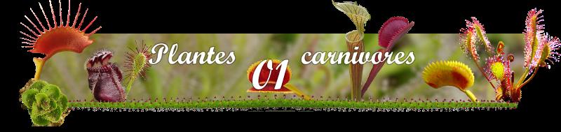 Plantes-carnivores01