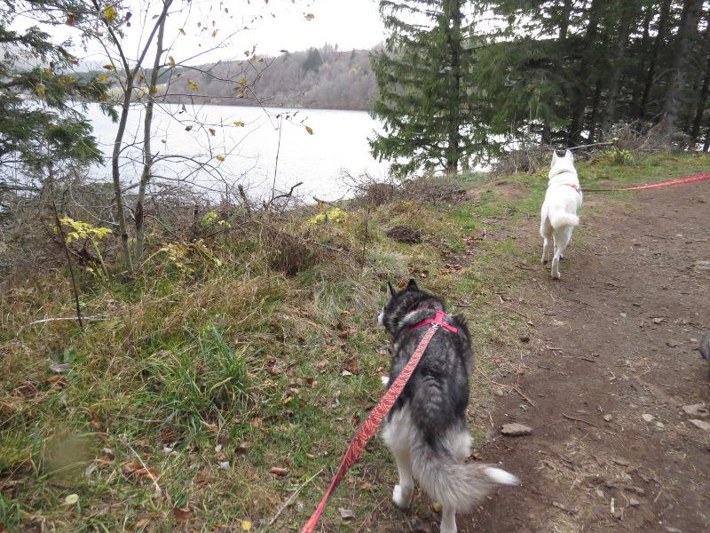 Chadka et Yocco au Lac du Guéry 03_cha10