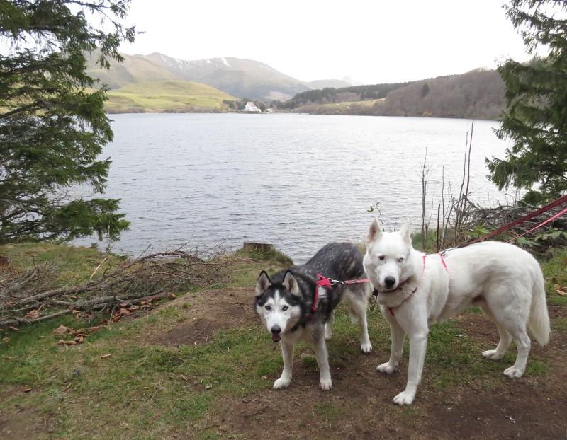 Chadka et Yocco au Lac du Guéry 07_cha10