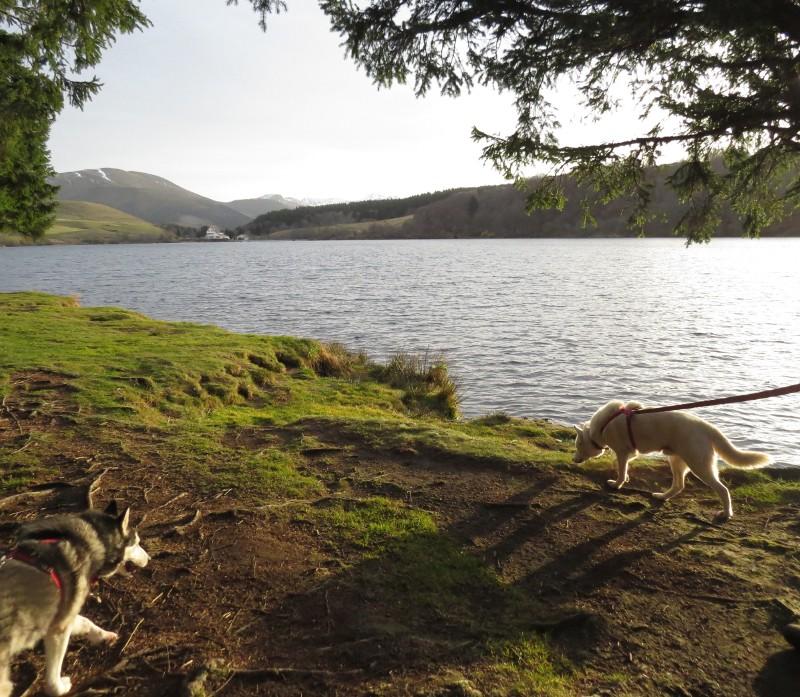 Chadka et Yocco au Lac du Guéry 10_cha10