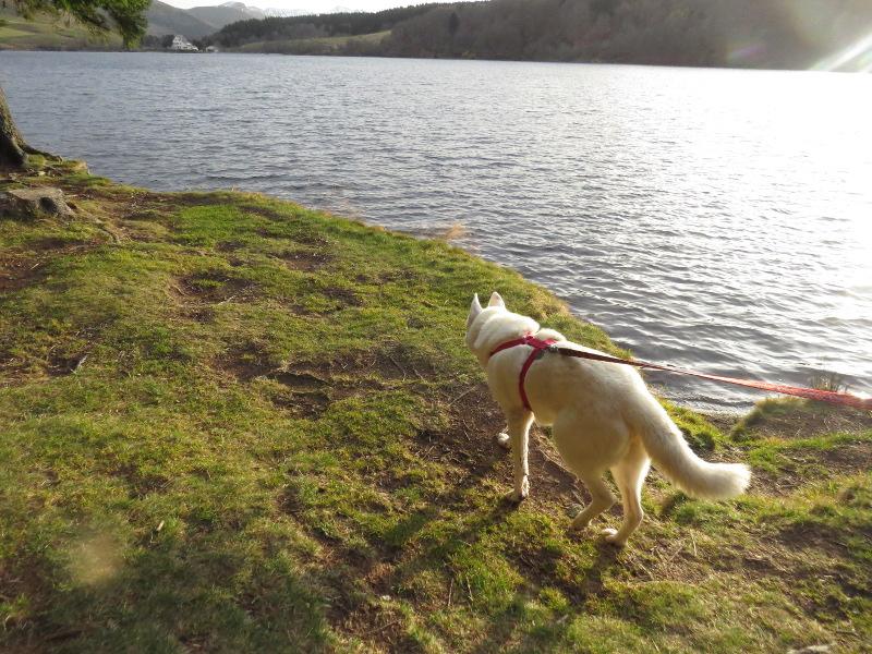 Chadka et Yocco au Lac du Guéry 13_yoc10
