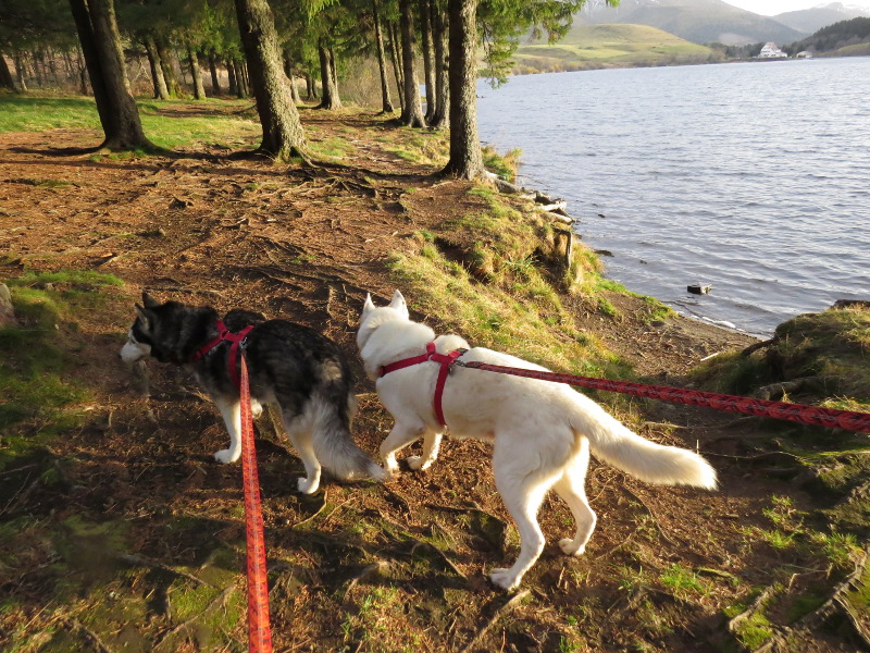 Chadka et Yocco au Lac du Guéry 14_cha10