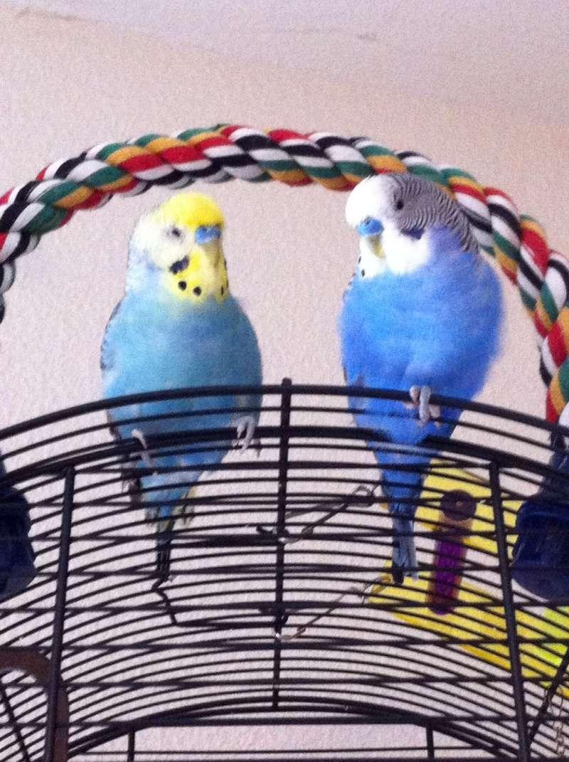 Je vous présente mes amours lili et Nico  14161410