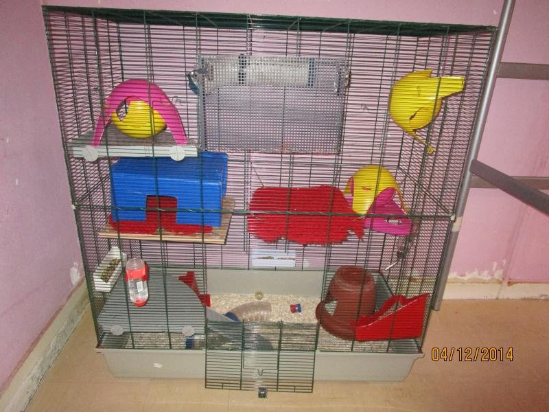 Photos de vos cages - Page 3 Horten11