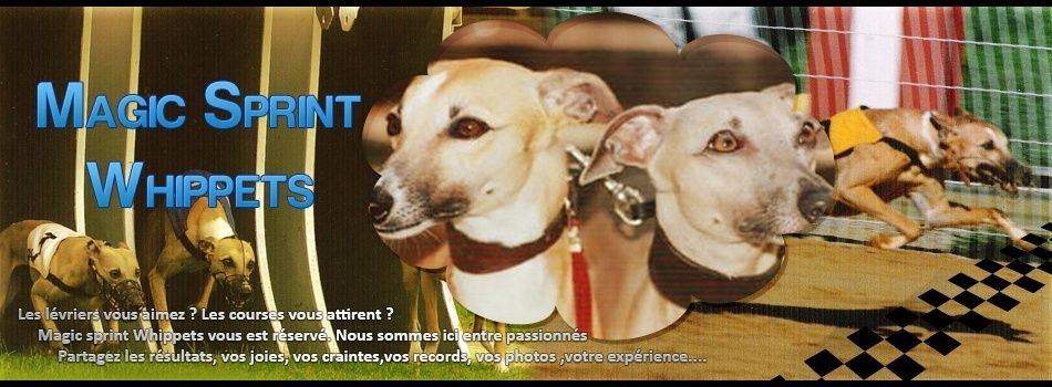 MAGIC SPRINT WHIPPETS - New portail*** Bannie10