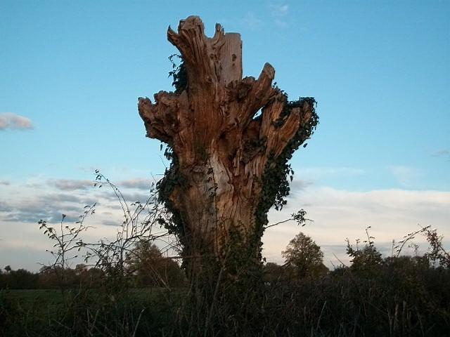 43 - les troncs d'arbres.... Le vote - Page 4 01-aut10