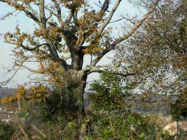 43 - les troncs d'arbres.... Le vote 02-dsc10