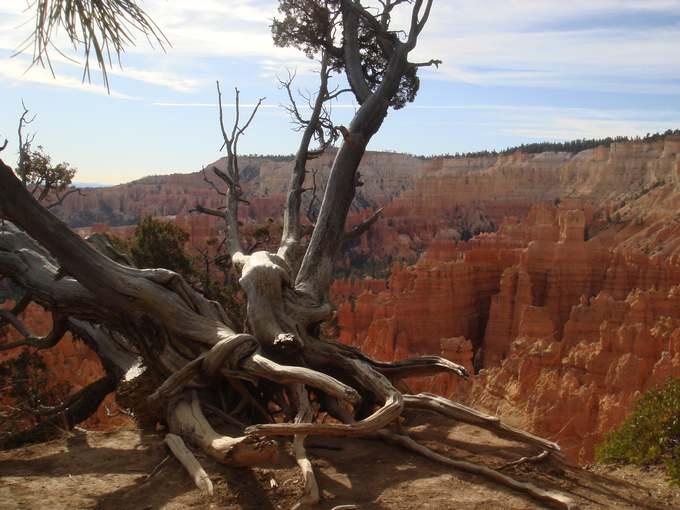 43 - les troncs d'arbres.... Le vote 04-bri10