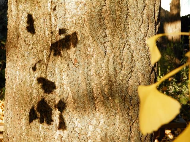 43 - les troncs d'arbres.... Le vote 05-tro10