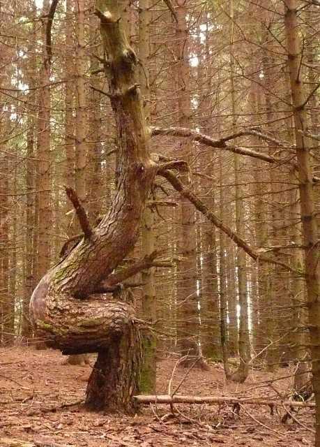 43 - les troncs d'arbres.... Le vote - Page 4 06-1_s10
