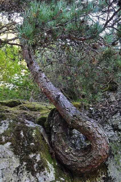 43 - les troncs d'arbres.... Le vote - Page 4 07-2_t11