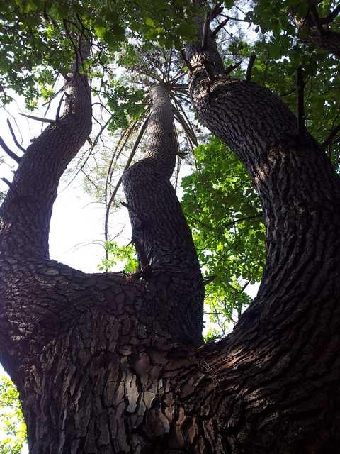 43 - les troncs d'arbres.... Le vote 08-20110
