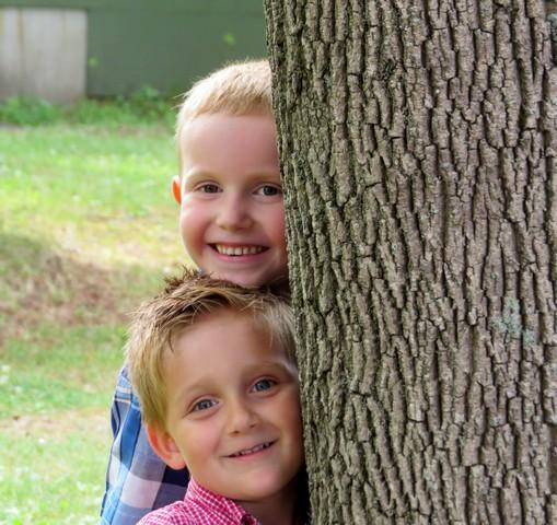 43 - les troncs d'arbres.... Le vote 10-14410