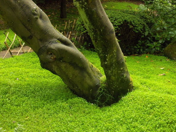 43 - les troncs d'arbres.... Le vote 13-dsc10