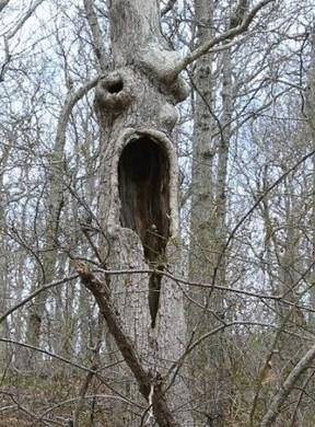 43 - les troncs d'arbres.... Le vote - Page 3 14-de610