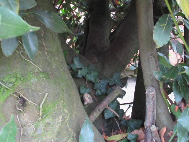 43 - les troncs d'arbres.... Le vote 16-lau10