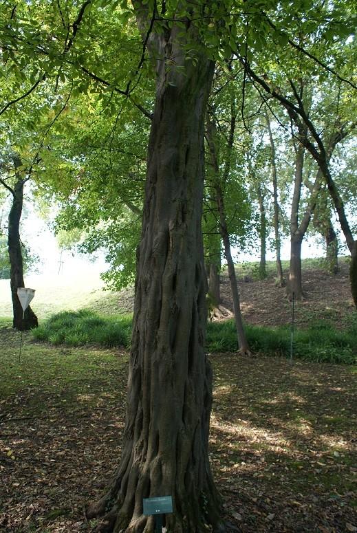 43 - les troncs d'arbres.... Le vote 18-car10