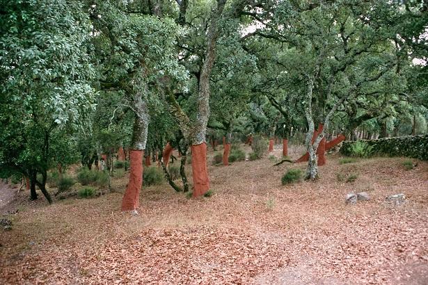 43 - les troncs d'arbres.... Le vote 19-par10
