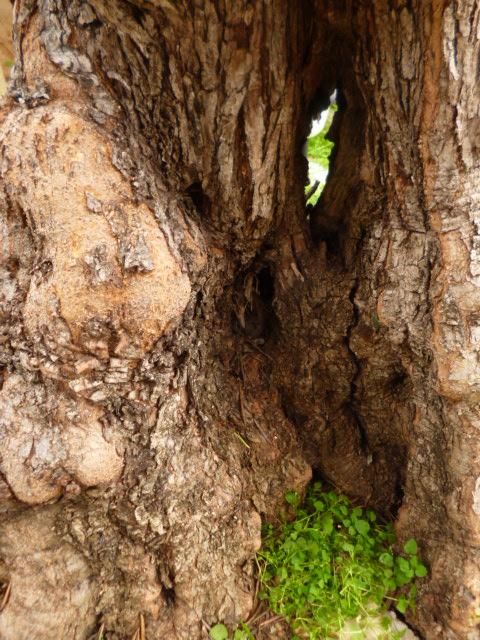43 - les troncs d'arbres.... Le vote 21-51110