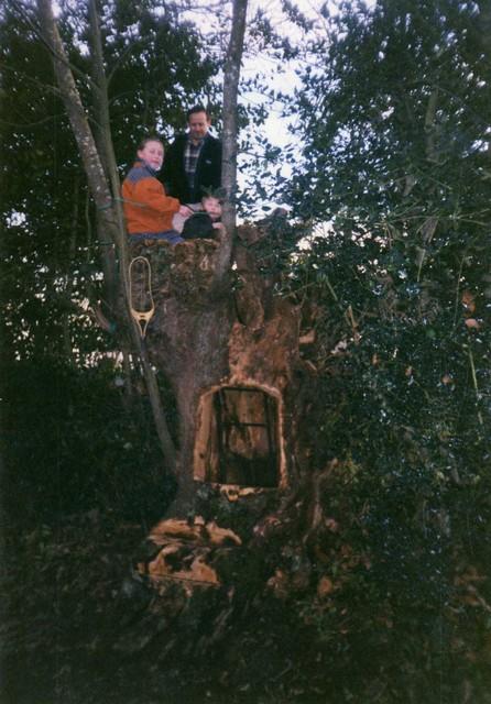 43 - les troncs d'arbres.... Le vote - Page 2 25-19910
