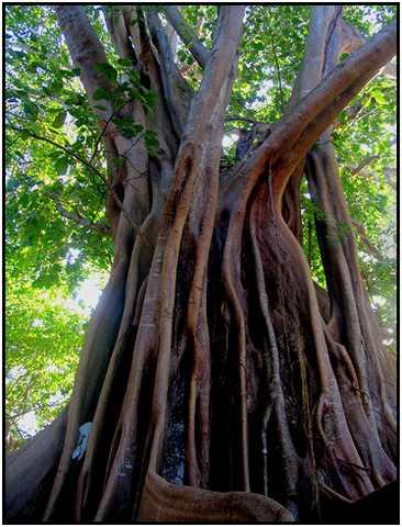 43 - les troncs d'arbres.... Le vote - Page 2 28-gwa10