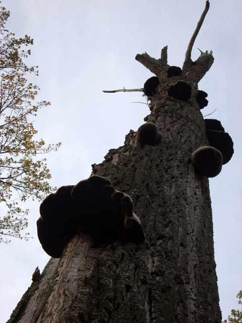 43 - les troncs d'arbres.... Le vote - Page 2 29-20110
