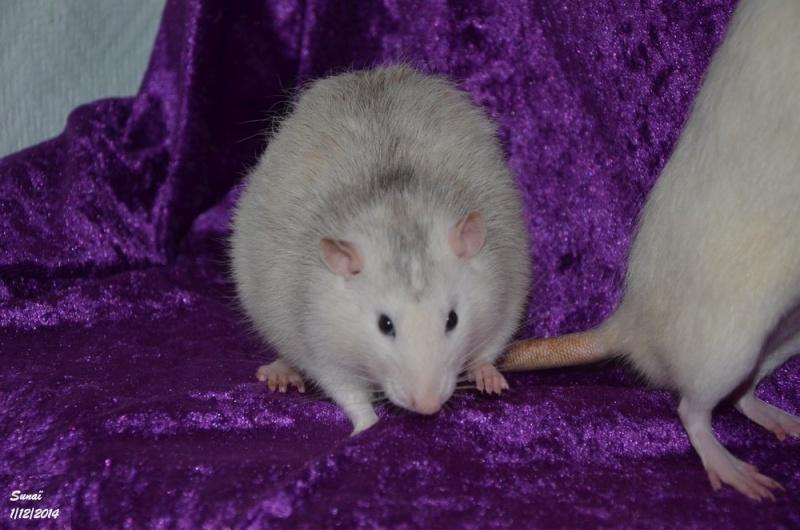Les ratous de breizhael - 3eme génération - Page 2 Dsc_0412