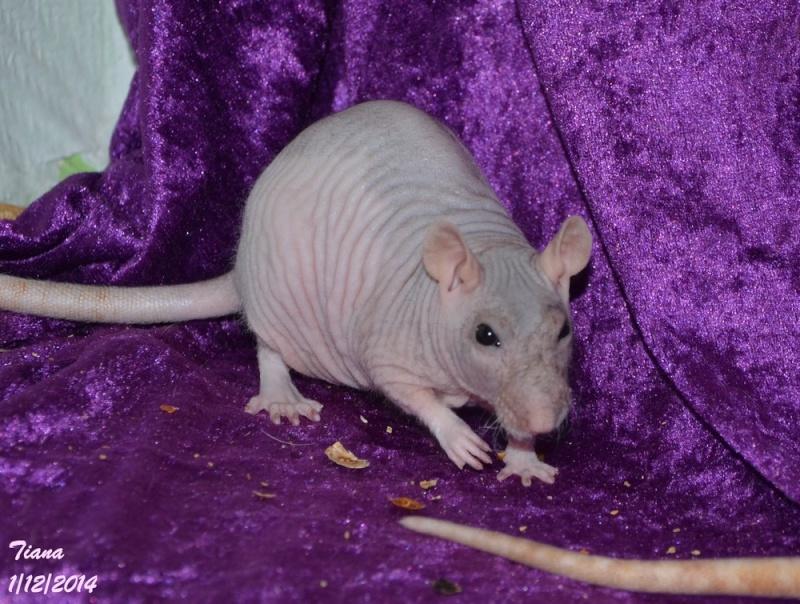 Les ratous de breizhael - 3eme génération - Page 2 Dsc_0518
