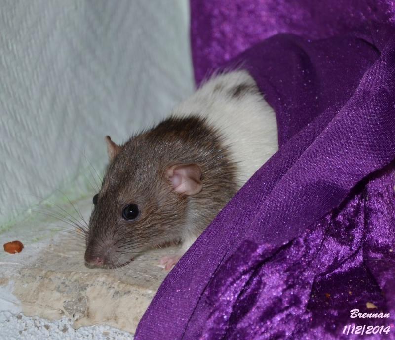 Les ratous de breizhael - 3eme génération - Page 2 Dsc_0519