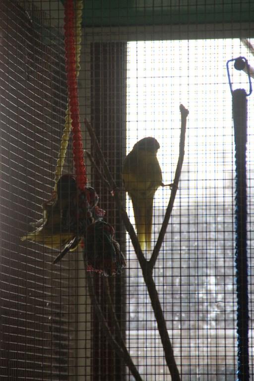 Jade et Flipper, mes nouveaux compagnons. 006_co11