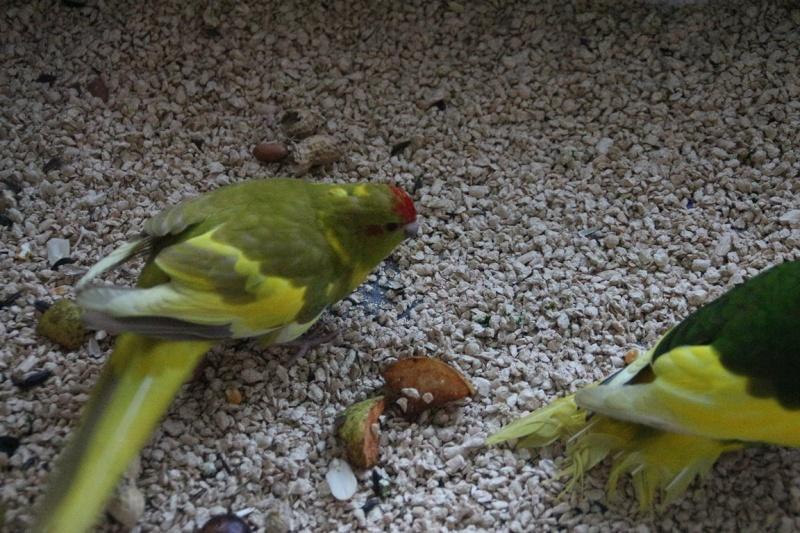 Jade et Flipper, mes nouveaux compagnons. 009_co10