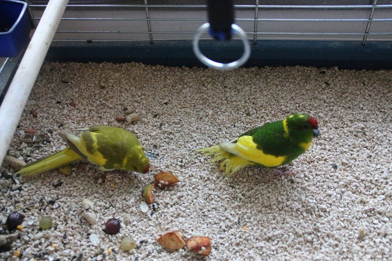 Jade et Flipper, mes nouveaux compagnons. 010_co11