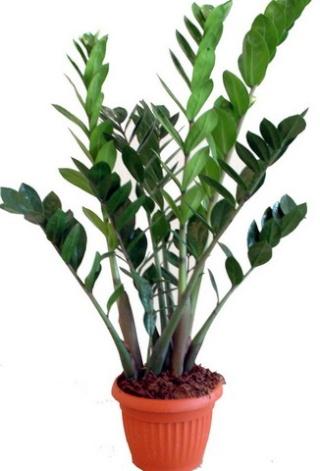 Plantes adaptées aux terrariums tropicaux humides 6a00d810