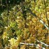 Plantes adaptées aux terrariums tropicaux humides Sphagn10