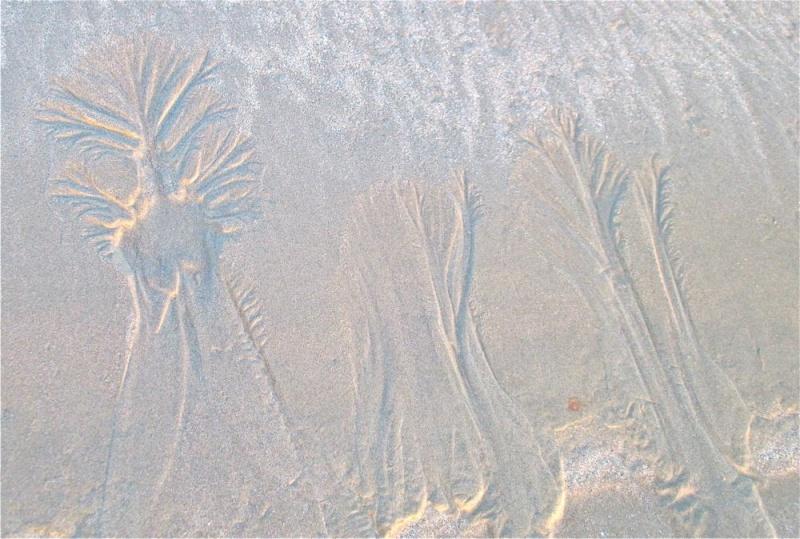 Baobab des sables Img_2215