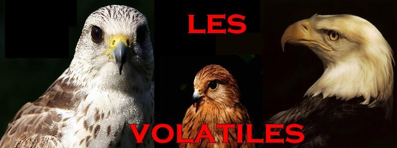 Faucons, Aigles, Vautours, Rapaces et tous les autres oiseaux