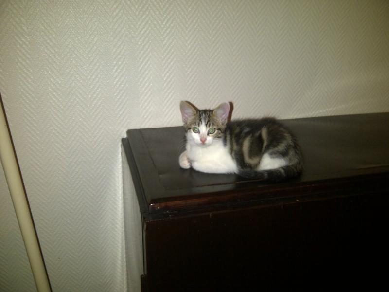 4 chatons 2mois et demi - recherche adoptants, FA ou ASSO Image110