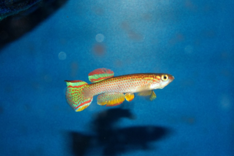 Aqua Club Du Pays des Lacs de LOUPERSHOUSE : Le local Dscf6710