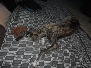 Amanda pauvre petite née en 2006  Adoptée Scooby France  - Page 2 Amanda12